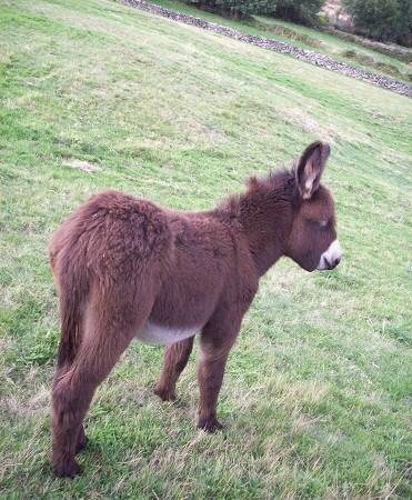 Me alegró ver que en varias fincas de alrededor había más burros pastando así que parece ser que en esa zona aún se les tiene algo de aprecio.  Miguel Ángel