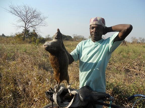 Por la rata que aparece en la foto esperaba conseguir unos 3 euros, un cincuenta por ciento más del jornal que hubiera percibido trabajando de sol a sol en el campo.  Joaquín