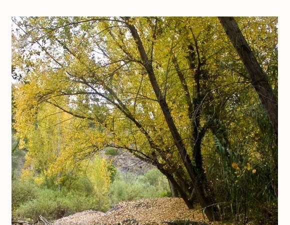 Las hojas sólo enseñan todos sus colores al final, antes de la caída.  Mónica Fernández-Aceytuno