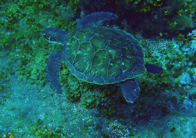 No nos íbamos a ir a dormir sin recordar algo más de la fauna submarina de El Hierro, ese sueño.  Aceytuno