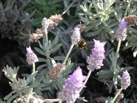 Habitualmente doy un paseo todas las mañanas. Suele ser un paseo largo,  que a veces  acompaño con hacer fotos de las plantas, flores, insectos, etc.  José Manuel Guerra Sanz