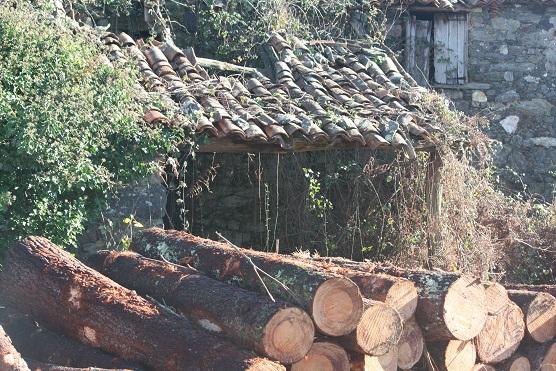 La leña apilada es un bosque hecho pedazos.  Mónica Fernández-Aceytuno