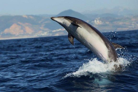Estuvimos recorriendo el estrecho donde avistamos muchos cetáceos.  Carlos Romero