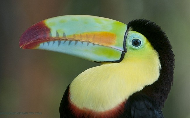 The Toucan was in a large enclosure, the folks there would place them on your shoulder for you, or you head!  Raymond
