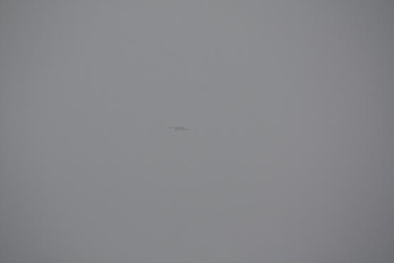 La niebla es la esperanza hecha agua.  Mónica Fernández-Aceytuno