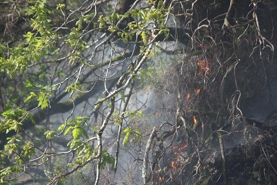 Lloro al ver esta foto en la que se retrata lo que jamás tendría que haber ocurrido: que llegara el incendio al pie de un roble.