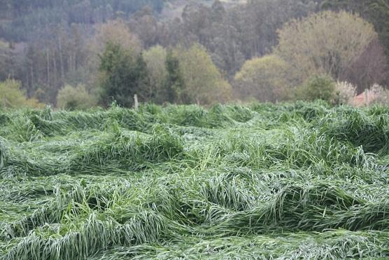 Hace un par de días, amaneció así el campo de hierba de tres cortes que hay aquí al lado, y como habían caído fortísimos chaparrones toda la noche, pensé…  Mónica Fernández-Aceytuno
