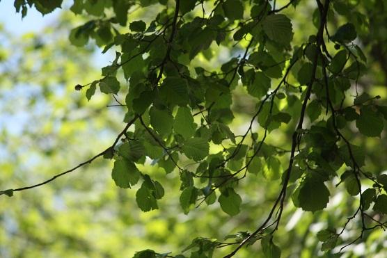 Aún más que las piedras, hablan los árboles.  MF-A  enclaraguas término sugerido para el diccionario por María Luisa