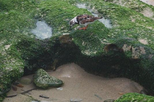 Un niño mirando al océano tras el faro blanco entre la bruma, mientras los vuelvepiedras buscan un mundo bajo las cosas.  MF-A