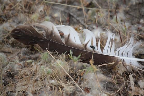 Al encontrarme con esta pluma he recordado que no quiero olvidarme de definir el álula de las aves.  álula término incorporado hoy al diccionario