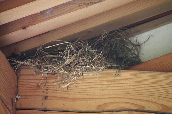 Ese nido escondido en el hueco de un edificio es todo su recuerdo del campo.  MF-A