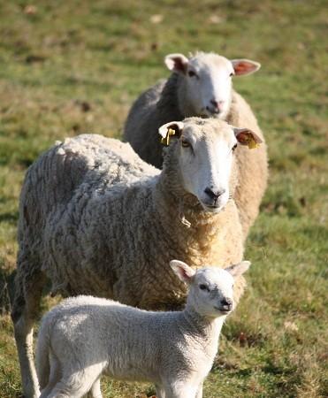 Gracias a Yzur hemos incorporado un nuevo término al diccionario: harrañe, relacionado con el ganado.  MF-A
