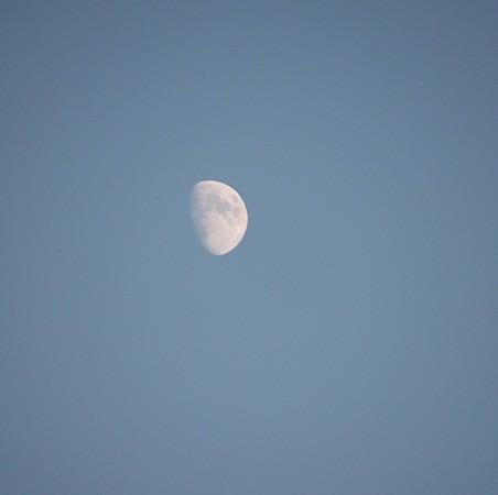 El cielo azul y una luna blanca en lo alto.The blue sky and a white moon high above.  MF-A