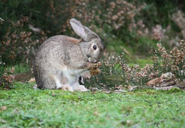 Las plantas son la raíz de los animales. MF-A  sacho  término incorporado hoy al diccionario de la Naturaleza