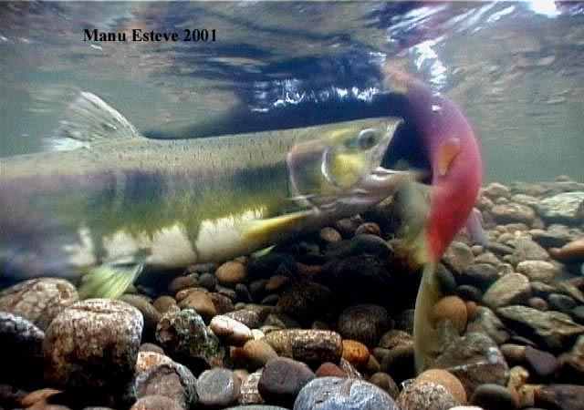Le imagino soñando con el Urumea y los salmones que deben de estar ya remontando el río como entonces.  MF-A