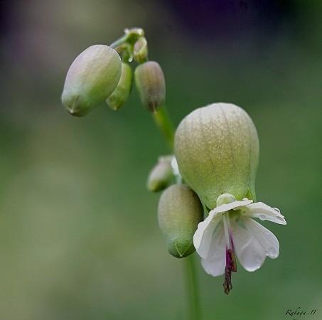 Esa flor de cabeza hueca en la que siempre nos fijamos… MF-A Autor de la imagen:Rafael Cuadrado Galán (Rakuga)