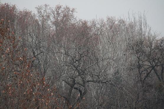 Me parece que es ahora cuando son más elegantes los árboles del parque, encanecidos entre la niebla.  MF-A