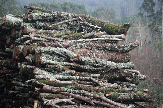 La leña apilada es un bosque hecho pedazos. MF-A  leña término incorporado hoy al diccionario de la Naturaleza