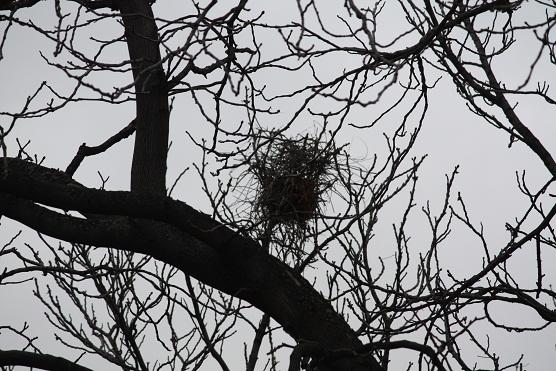 Ni con el vendaval se han caído los nidos de las urracas.  MF-A