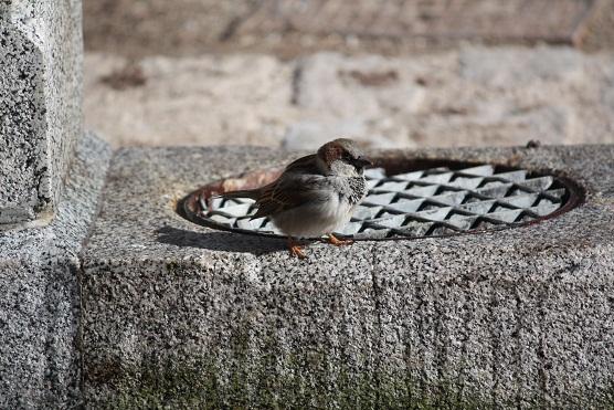 El nombre nace en los sentidos, y en el pensamiento se juntan las letras para salir volando por la boca, el ave ya convertida en palabra.   MF-A