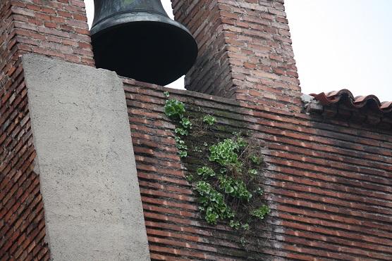 En la Parroquia de San Sebastián, en la madrileña calle de Atocha, gracias a la humedad de la pared del campanario, viven los ombligos de Venus.  MF-A