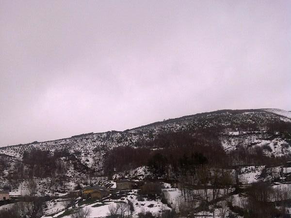 La inocencia de los árboles deshojados, que tienen siglos, grises como el invierno, sobre la nieve de un día.  MF-A