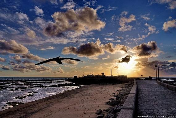 En vuelo majestuoso planea la gaviota hacia una puesta de sol dorada.  Instantánea realizada por Manuel Sánchez Quijano.