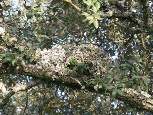 La tercera rama es una rama invisible que está entre la rama de las ciencias y la rama de las letras.  Aceytuno del viernes, 1-3-2013