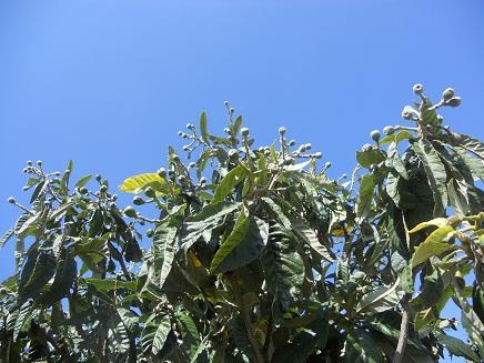 Hice la foto el domingo pasado, aprovechando un día sin lluvia y con un limpísimo cielo azul.  Joaquín