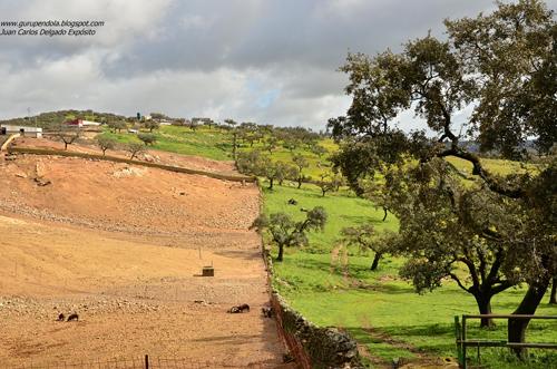 Con exactitud no sabemos cuándo comenzó el hombre a modificar el bosque mediterráneo para convertirlo en dehesa tal y como la conocemos hoy.
