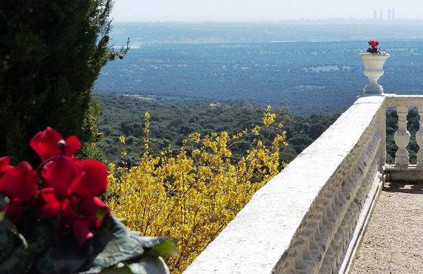 """Habían colocado, sobre las grandes copas blancas de la balaustrada, con el verde seco del monte de """"El Pardo"""" y la blancura de Madrid al fondo, unas flores de ciclamen rojas.  MF-A"""