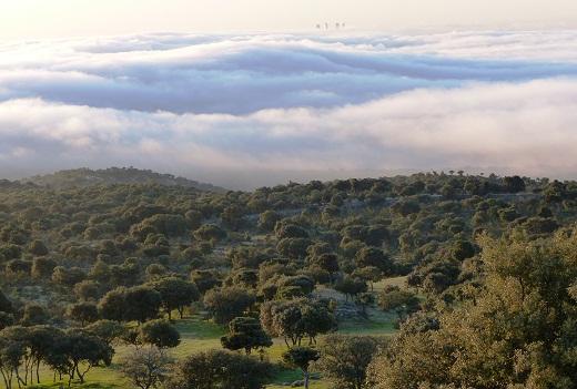 Esto es el amanecer el dia 11 de abril, es una imagen frecuente en la sierra de Madrid.  RM
