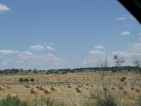 La distribución de las pacas o balas de heno sobre el terreno nos causó una grata impresión.  Pilar
