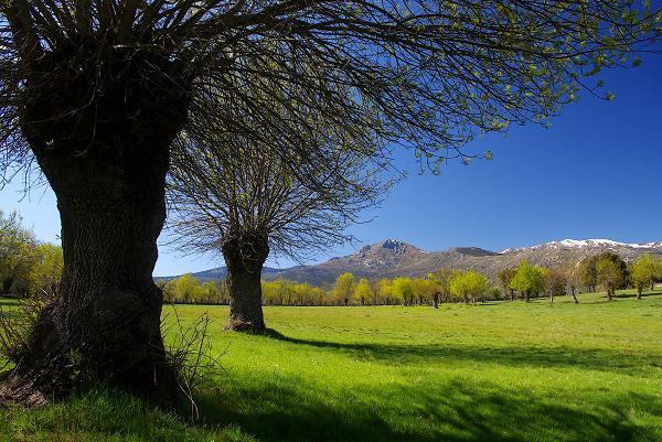 La sierra era el lugar donde estaba la Naturaleza. Mónica Fernández-Aceytuno  FOTO: Prados y Guadarrama  AUTOR:José Mª Sendarrubia