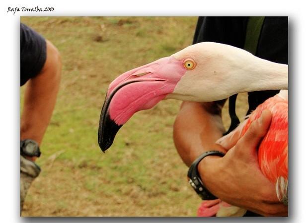 Parece mentira que las aves puedan ser víctimas del cielo. Mónica Fernández-Aceytuno  AUTOR DE LA IMAGEN: Rafa Torralba