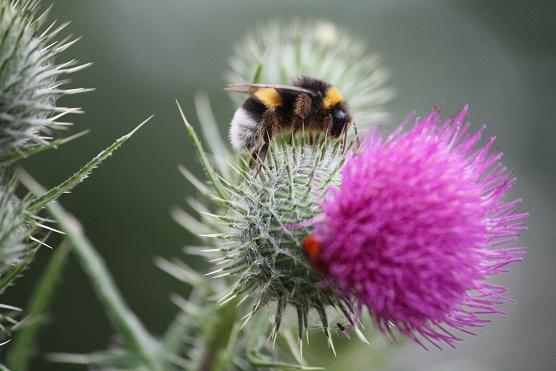 Se diría que estuviera cavando, como si intentara realizar un butrón para llegar a la caja de caudales del néctar de la flor.   Mónica Fernández-Aceytuno