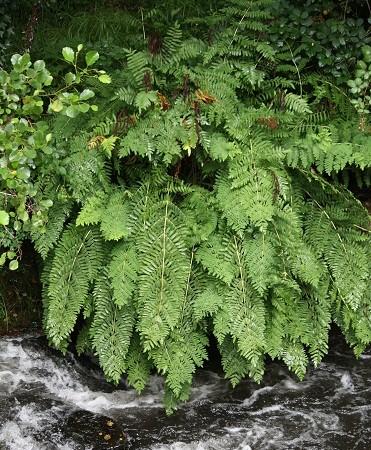Es un agua que, según cae del cielo, se va con el río.  Mónica Fernández-Aceytuno