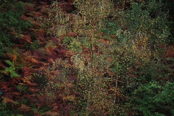 Hojas y helechos de otoño