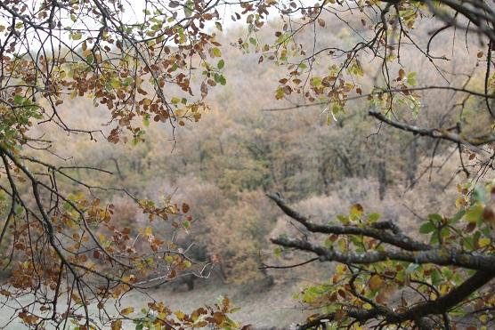 No es que este bosque fuera un sueño; es que se diría que todo el quejigar soñaba que siempre es otoño.  Mónica Fernández-Aceytuno