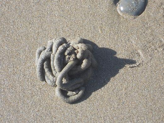Paseando el día de Reyes por la zona intermareal de la  playa de Vistahermosa, de finísima arena, fotografié el montón de detritos de un gusano arenícola.  Joaquín