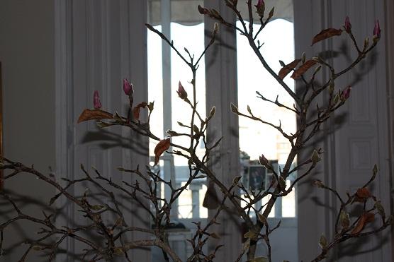 Me gusta este mundo al revés, de un árbol, o al menos sus ramas, dentro de la casa.  Mónica Fernández-Aceytuno
