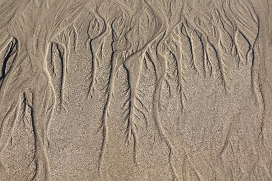 En la bajamar se nota que el agua tiene raíces.  Mónica Fernández-Aceytuno