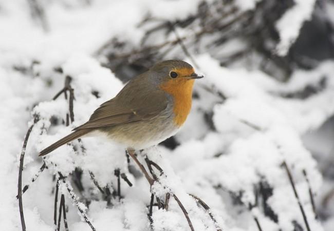 Cuando la carama persiste la gente dice que va a nevar más.  Yzur  AUTOR DE LA FOTO: Javier Valladares