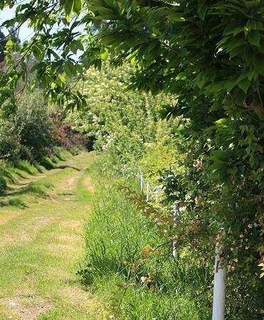 Ayer supe que también a Cézanne le gustaban los caminos que no se ve dónde acaban.  Mónica Fernández-Aceytuno