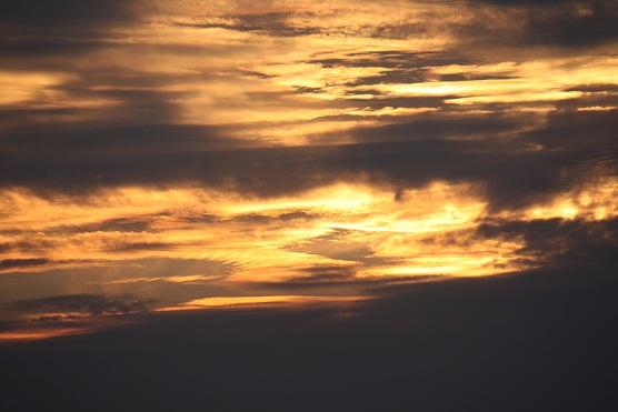 Amanece en Guayaquil, Ecuador. Bajo un cielo familiar, cantan pájaros distintos.  Mónica Fernández-Aceytuno
