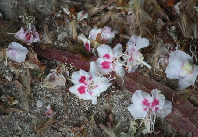 Si hay algo que una flor no puede permitirse es perder el tiempo.  Mónica Fernández-Aceytuno