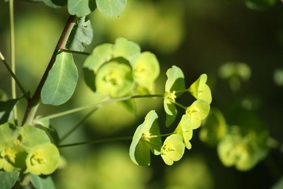 Incluso para las flores, resulta superfluo lo innecesario.  Mónica Fernández-Aceytuno