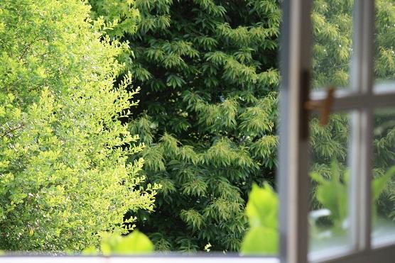 No cabe ni un verde más por la ventana.  Mónica Fernández-Aceytuno