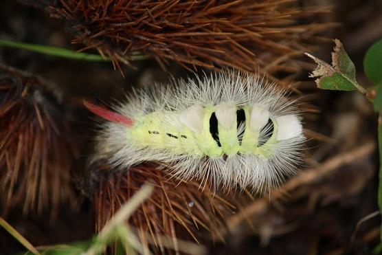 La especiación es una fuerza generadora de especies.  Mónica Fernández-Aceytuno