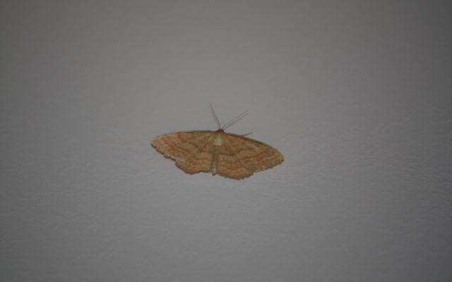 Esas anodinas mariposas